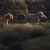 Trilha sonora de O Rei Leão chega ao Spotify; ouça
